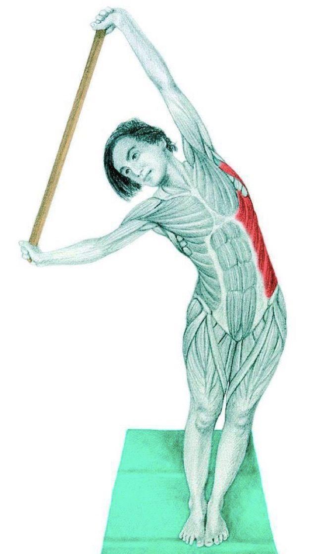 Анатомия стретчинга: боковые наклоны
