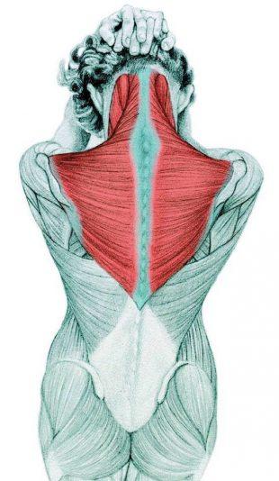 Анатомия стретчинга: растяжка сгибателей шеи