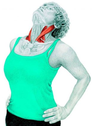 Анатомия стретчинга: растяжка расширителей шеи