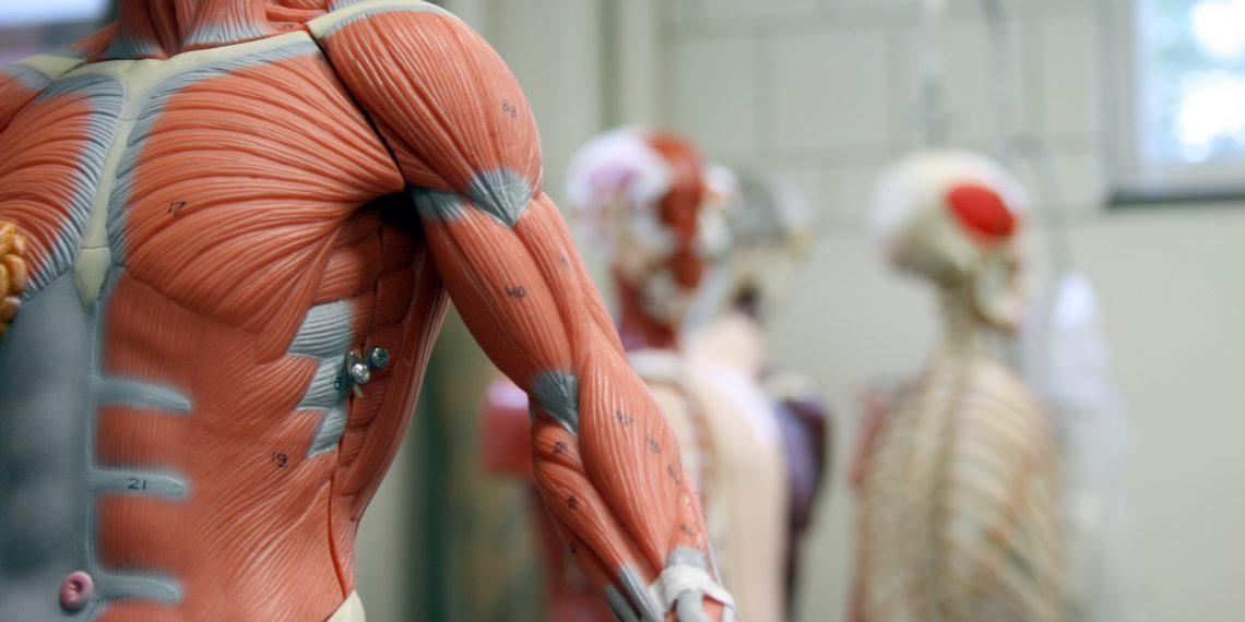 ВИДЕО: Документальный фильм о строении и работе мышц