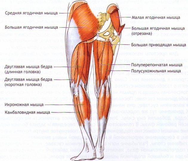 Мышцы, которые помогают нам удерживать равновесие
