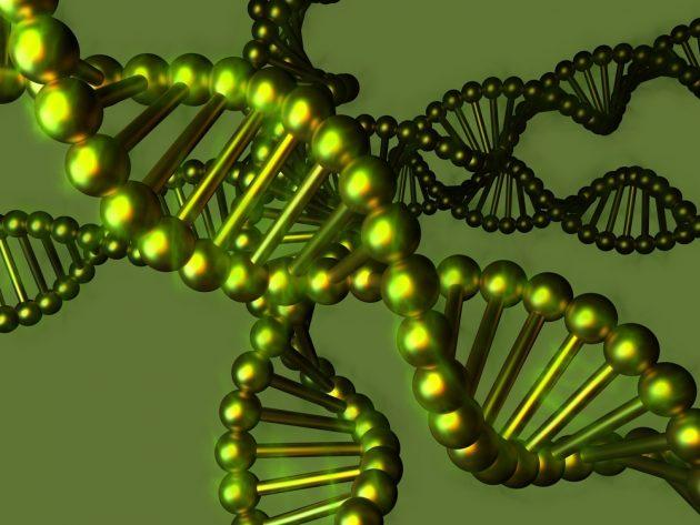Голодание и ген SIRT1