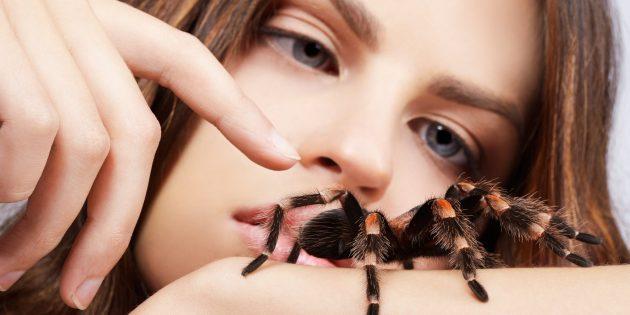 Как справиться с боязнью пауков, тараканов и прочей гадости