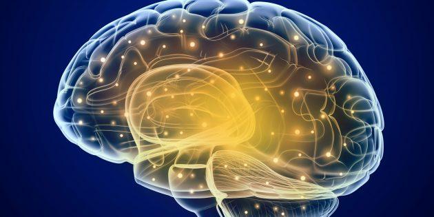 Как импульсивность влияет на наш мозг