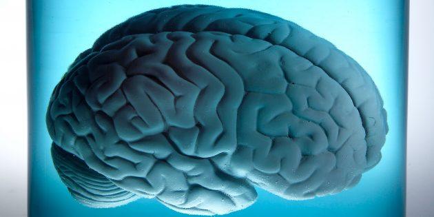 Как сохранить свой мозг молодым и здоровым в течении всей жизни