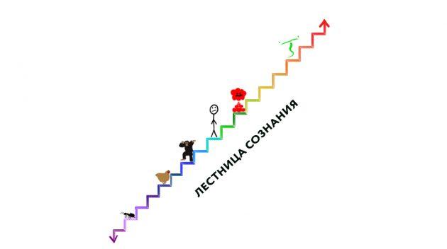 смысл жизни человека: лестница сознания