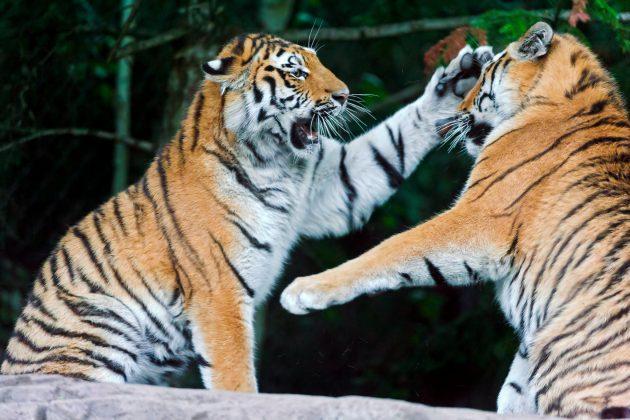 Практики конфликтования: конфликтовать нельзя жить мирно