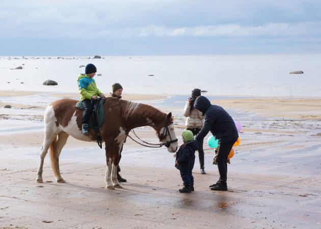 дом у моря, конный спорт