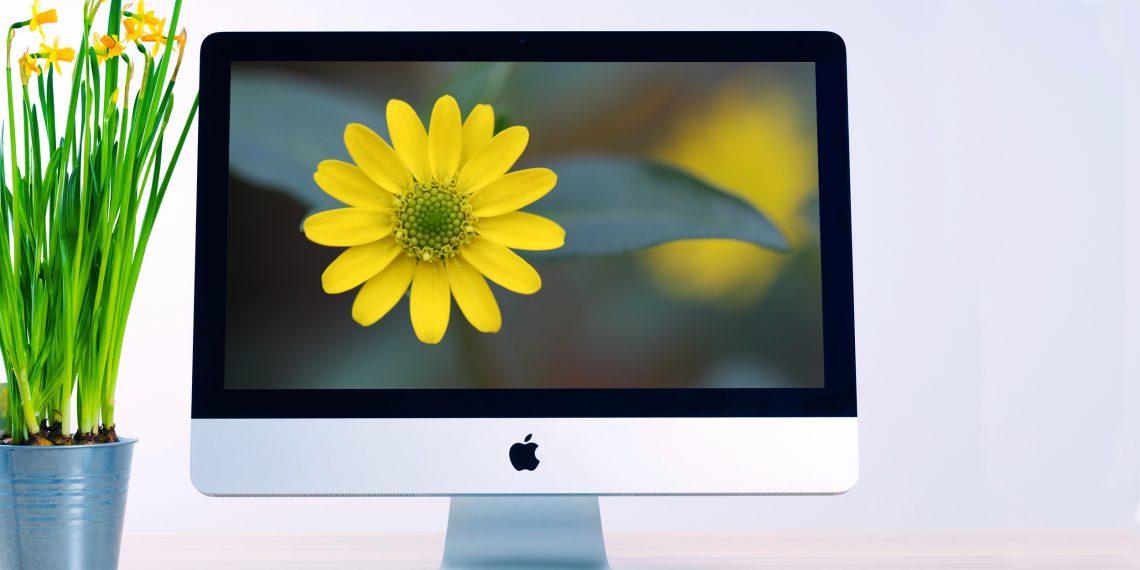 Красивые цветы для вашего рабочего стола и экрана блокировки