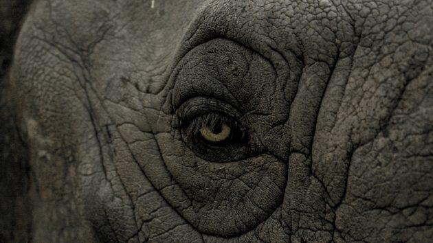 Милые животные: слон