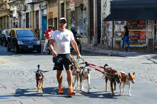 посетить Аргентину: собаки