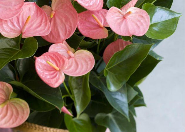 Лучшие комнатные растения для очистки воздуха по версии NASA
