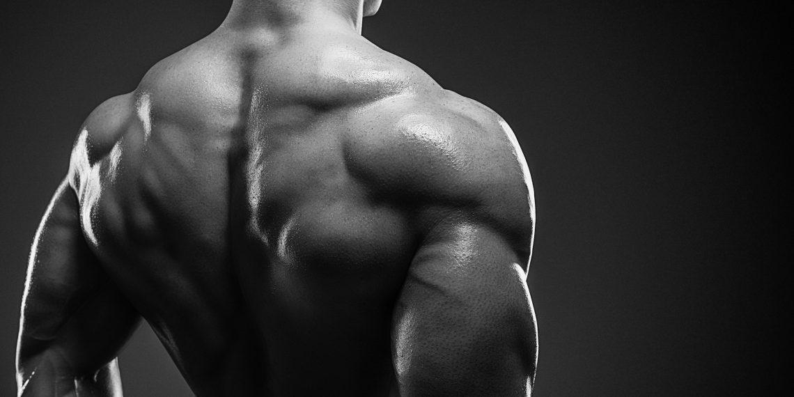 Что заставляет наши мышцы расти