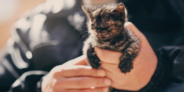 Что делать, если вы подобрали животное на улице