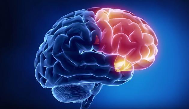 мифы о здоровье: мозг