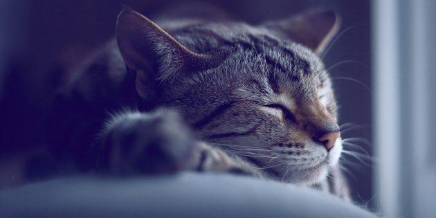 Что нужно знать о своём сне, чтобы высыпаться