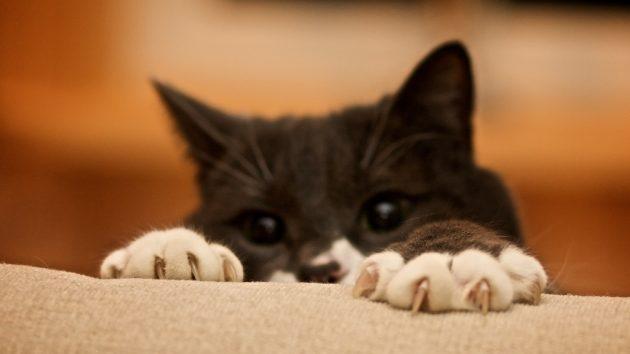 как понять кошку: агрессия