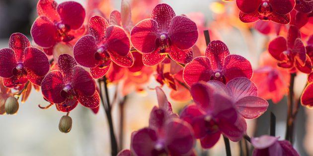 Уход за орхидеями: основные правила и тонкости для разных сортов
