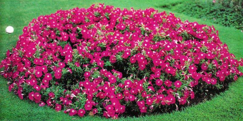 flower-bed_1527162945-e1527163129247.jpg