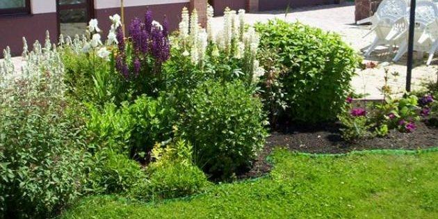 flower-bed_1527164120-e1527164146221.jpg