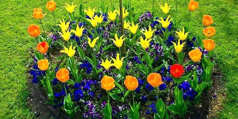 flower-bed_1527164170-e1527164184426.jpg