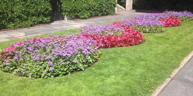 flower-bed_1527164415-e1527164445305.jpg