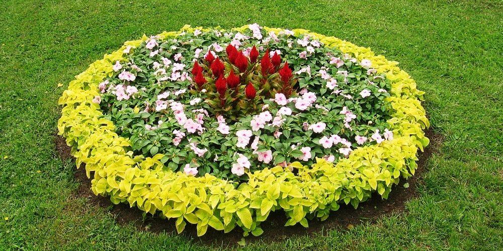 flower-bed_1527164540-e1527164556441.jpg