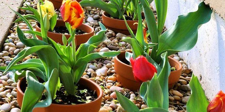 flower-bed_1527169589-e1527169680808.jpg