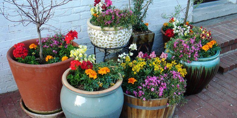 flower-bed_1527169852-e1527169929574.jpg