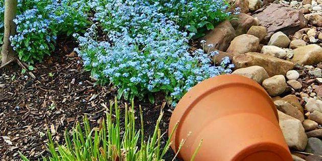 flower-bed_1527172102-e1527172122701.jpg