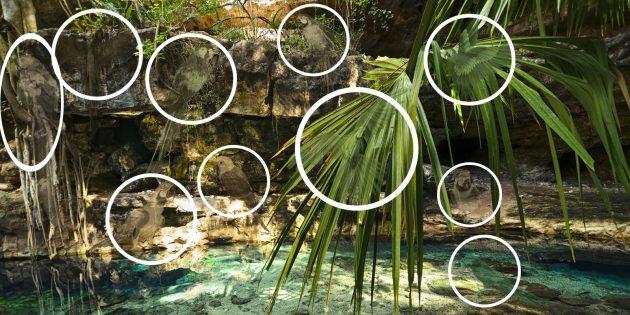 Найдите на картинке всех попугаев